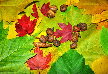 Autumn background formed by colorful leaves and acorns photo