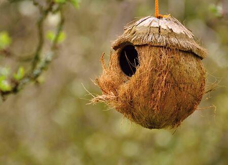 Bird feeder made from coconut on a blurred background Reklamní fotografie