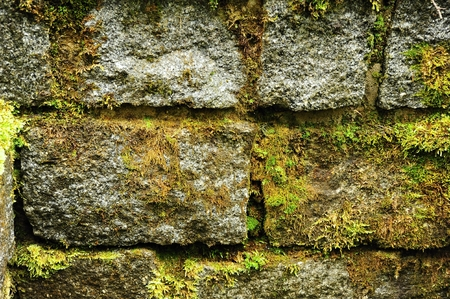 Texture of rough stone wall with green moss after a spring rain photo