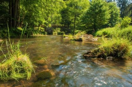 czech switzerland: Wild River Kamenice che scorre tra rocce in Svizzera Ceca