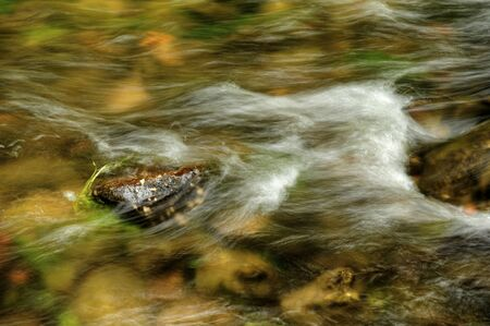 czech switzerland: Small waves in the river Kamenice in Czech Switzerland