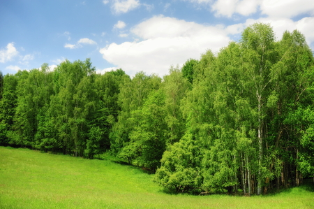 czech switzerland: Beautiful green meadow and trees in the Czech Switzerland