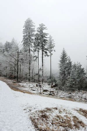 snow covered forest: Winter snow - covered forest road in the evening Stock Photo