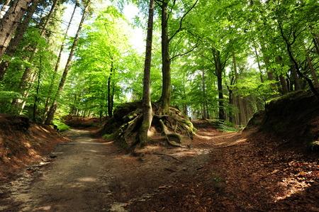 Kleine Wald Kreuzung mit Bäumen und unbefestigte Straße