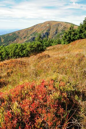 krkonose: Beautiful colorful autumn landscape with plants and trees in Bohemian Krkonose