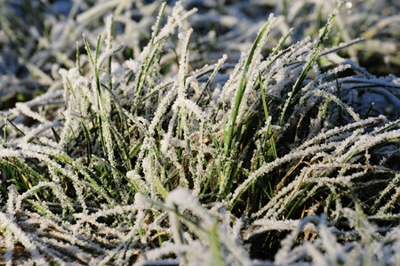 Detailed view of green frozen grass in the afternoon sun