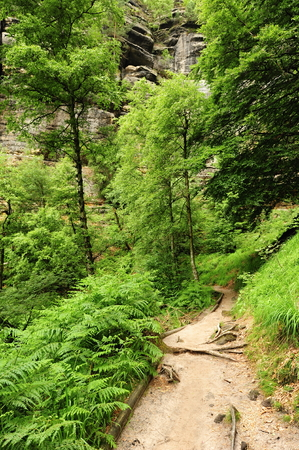 czech switzerland: Beautiful landscape of Bohemian Switzerland with forests and gorges Archivio Fotografico
