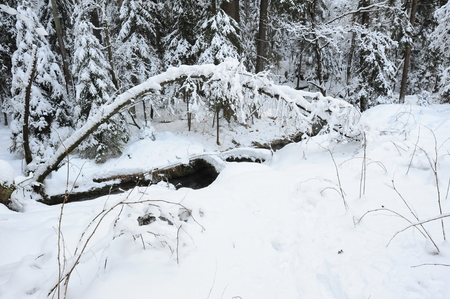Winter creek with snow in the Czech Switzerland Stock Photo