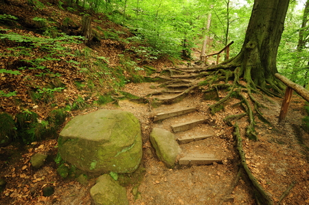 Forest path through old rocks and spring plants