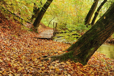 Fallen beautiful colored leaves in dark autumn forest Stock Photo