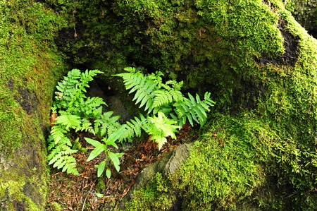 Beautiful green spring moss and fern in the forest