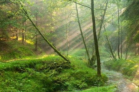 Sunshine rays glowing in fog in a green forest