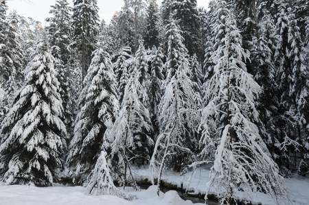 Winter landscape with snow in the Czech Switzerland Stock Photo