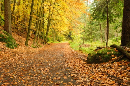 Autumn road leading misty forest with fallen leaves Stock Photo
