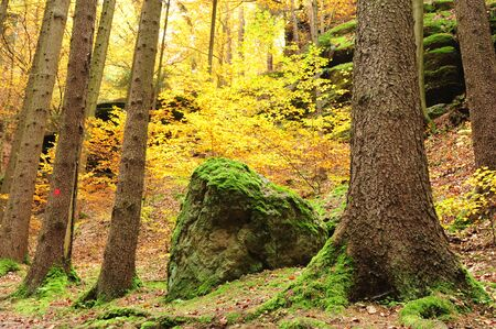 Beautiful autumn color forest with color leaves and foliage Stock Photo