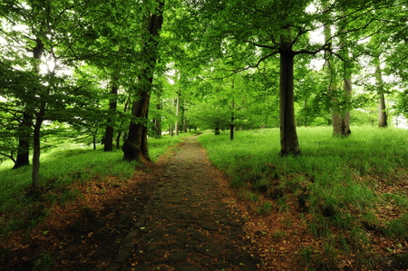 Forest path with fresh spring grass and tribes Stock Photo