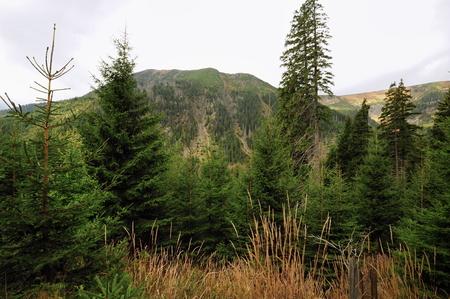 View of the rocky landscape of the Krkonose