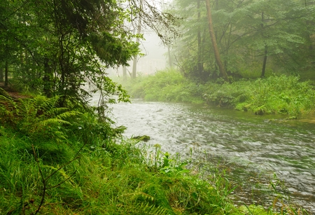 Small River flowing through a green forest in rain and fog