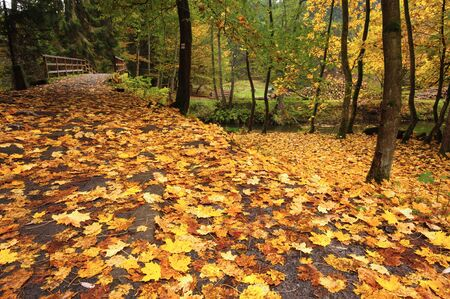 Autumn road leading misty forest with fallen leaves Reklamní fotografie