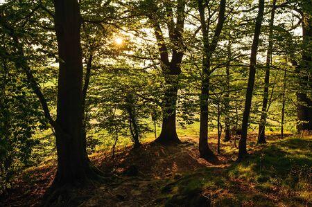 Evening sun rays shining through beautiful green forest Reklamní fotografie