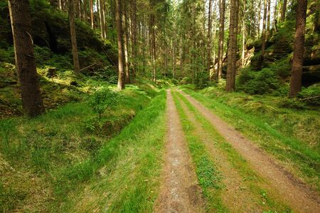 Beautiful hiking path leading through green forest