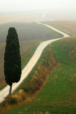 Solitary cypress tree with gravel rad in morning fog, Tuscany, Italy
