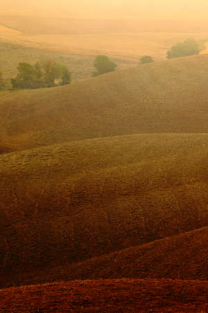 sow: Wavy brown hillocks, sow field, agriculture landscape, nature carpet, Tuscany, Italy Stock Photo