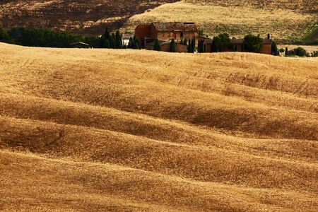 battleground: Wavy hillocks sow field with house, agriculture landscape, nature carpet, Tuscany, Italy