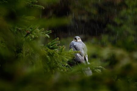 Rain in the forest with bird Stock Photo