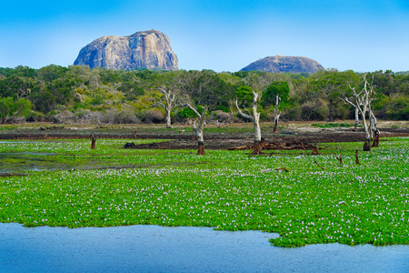 Yala National Park, Sri Lanka, Asia. Beautiful landscape, lake with water flowers and old trees. Forest in Sri Lanka, Big stone rock in the background. Summer day in wilderness, holiday in Asia. Stock Photo