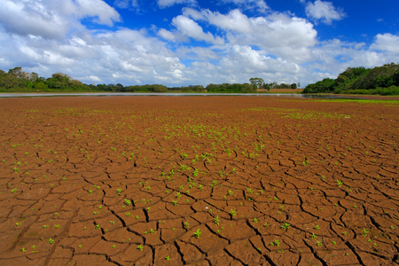 Dry summer with blue sky and white clouds. Dryness lake in the hot summer. Cano Negro, Costa Rica. Mud lake with little green flower. Summer without water. Dry season without rain. Summer season. Stock Photo