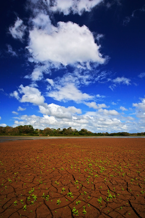 Dry summer with blue sky and white clouds. Dryness lake in the hot summer. CanoNegro, Costa Rica. Mud lake with little green flower. Summer without water. Dry season without rain. Summer season. Stock Photo