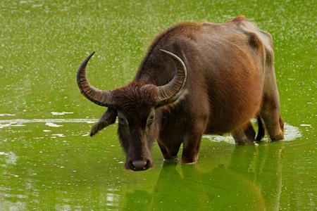 asian-ox-wild-hd-asian-porn-free