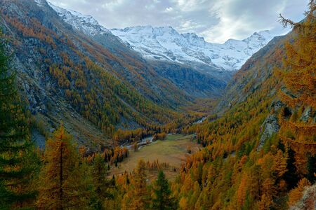 Autumn lanscape in the Alp. Nature habitat with autumn orange larch tree and rocks in background, National Park Gran Paradiso, Italy. Orange larch forest in the Valnontay valley during autumn.