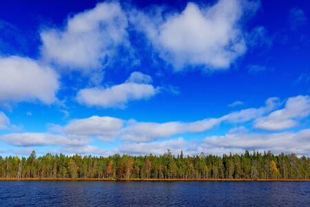 End of summer landscape from Finland. Pine forest coast with lake ans dark blue sky with white clouds. Beautiful scenery from north of Europe. Water in the lake.