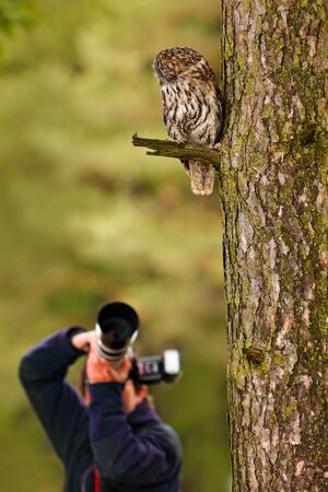 Owl with photographer. Tawny owl hidden in the forest. Brown owl sitting on tree stump in the dark forest habitat with catch. Beautiful animal in nature. Bird in the Sweden forest.