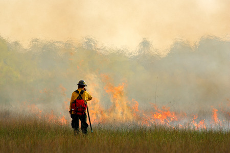 Wildfire in Everglades, grass in flame and fume. fireman with flame in the wild nature. Fire fighter working with wildfire. Stock Photo