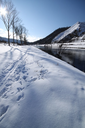 ski traces: River bank covered by snow with ski traces and line of trees