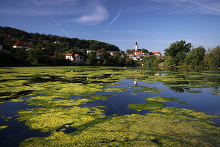 lake shore: Pond with lot of water weed and the village in the background