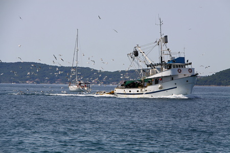 bevy: A fishing boat followed by the bevy of seaguls