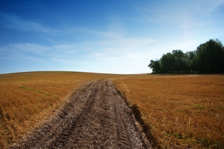 Summer landscape with yelow field, road and clouds photo