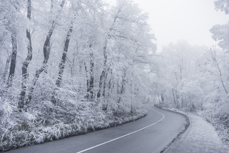 Winter road leading into the forest, snowy trees photo