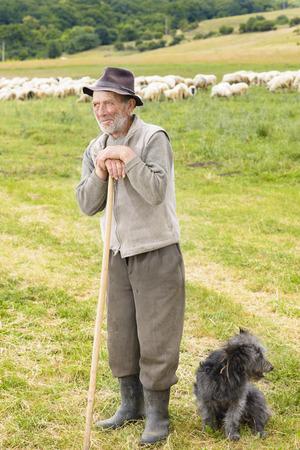 pastorcillo: Hombre shepperd Vieja con su perro cerca de rebaño Foto de archivo