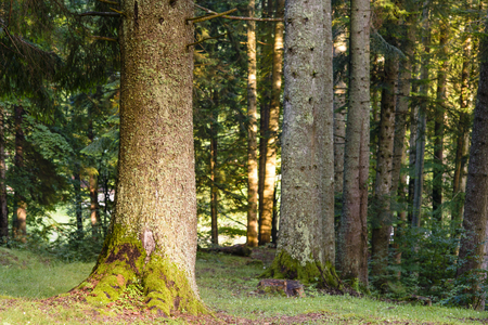 trailway: Forest Trees in autumn time Stock Photo
