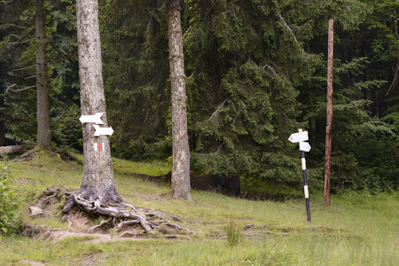 trailway: Hiking signs on trees in the mountain