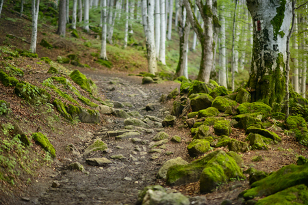 trailway: Footpath in the Forest with  mossy rocks around