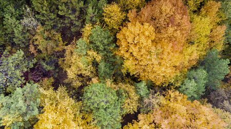 Aerial view of colorful forest at sunset, in autumn day Stok Fotoğraf