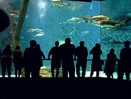 Aquarium Imagens