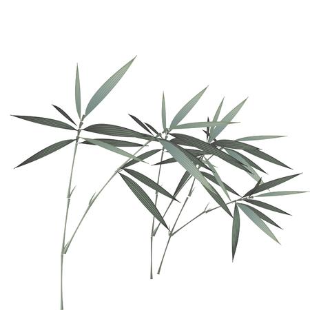 bamboo Иллюстрация