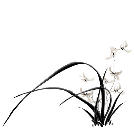 orchid: orchid